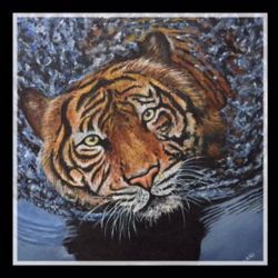 tiger , 18 x 18 inch, anitta paul,paintings,wildlife paintings,portrait paintings,photorealism paintings,realism paintings,animal paintings,realistic paintings,paintings for dining room,paintings for living room,paintings for office,canvas,acrylic color,18x18inch,GAL01159021752