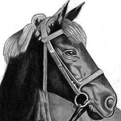 horse, 8 x 10 inch, shivkumar  menon,8x10inch,drawing paper,drawings,paintings for living room,art deco drawings,fine art drawings,paintings for living room,graphite pencil,GAL098622371