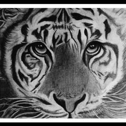 tiger, 13 x 10 inch, shivkumar  menon,13x10inch,drawing paper,drawings,art deco drawings,fine art drawings,portrait drawings,paintings for dining room,paintings for living room,graphite pencil,GAL098622390