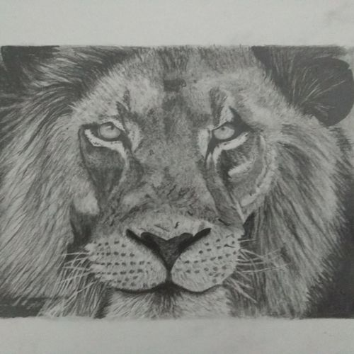 loin, 8 x 10 inch, manohar kasoju,8x10inch,drawing paper,drawings,paintings for dining room,paintings for living room,paintings for bedroom,paintings for office,paintings for kids room,paintings for hotel,paintings for school,graffiti drawings,realism drawings,paintings for dining room,paintings for living room,paintings for bedroom,paintings for office,paintings for kids room,paintings for hotel,paintings for school,graphite pencil,GAL01147922571