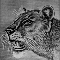 lioness, 8 x 11 inch, shivkumar  menon,8x11inch,drawing paper,drawings,paintings for living room,art deco drawings,fine art drawings,portrait drawings,paintings for living room,graphite pencil,GAL098622603