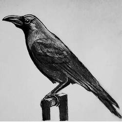 crow, 11 x 8 inch, shivkumar  menon,11x8inch,drawing paper,drawings,art deco drawings,fine art drawings,portrait drawings,paintings for dining room,paintings for living room,graphite pencil,GAL098622608