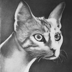cat, 8 x 11 inch, shivkumar  menon,8x11inch,drawing paper,drawings,art deco drawings,fine art drawings,portrait drawings,paintings for living room,graphite pencil,GAL098622610