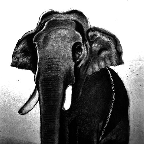 elephant, 8 x 11 inch, shivkumar  menon,8x11inch,drawing paper,drawings,paintings for dining room,paintings for living room,art deco drawings,fine art drawings,portrait drawings,paintings for dining room,paintings for living room,graphite pencil,GAL098622642