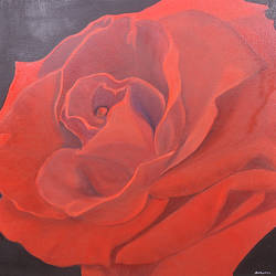 red rose, 24 x 24 inch, ananjay sharma,24x24inch,canvas,paintings,flower paintings,oil,GAL01266422647