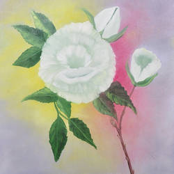 white rose, 20 x 16 inch, ananjay sharma,20x16inch,canvas,paintings,flower paintings,oil,GAL01266422649