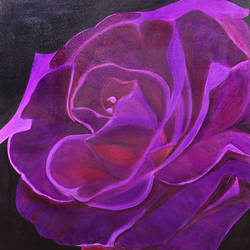 purple rose, 24 x 24 inch, ananjay sharma,24x24inch,canvas,paintings,flower paintings,paintings for dining room,paintings for living room,paintings for office,paintings for hotel,oil,GAL01266422696