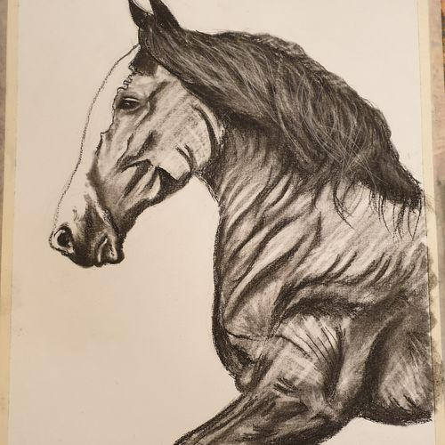 horse, 11 x 16 inch, diiliip sinh,11x16inch,brustro watercolor paper,drawings,figurative drawings,paintings for dining room,paintings for living room,paintings for bedroom,paintings for office,paintings for hotel,charcoal,GAL01260022728