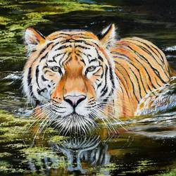 tiger in water, 22 x 15 inch, debojyoti boruah,22x15inch,canvas,paintings,wildlife paintings,photorealism paintings,photorealism,realism paintings,animal paintings,realistic paintings,paintings for dining room,paintings for living room,paintings for bedroom,paintings for office,paintings for hotel,paintings for school,paintings for hospital,acrylic color,GAL01261422861