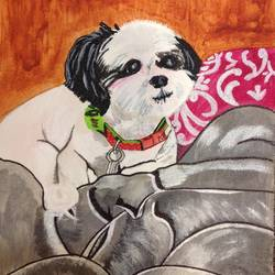 dog-shih tzu, 10 x 16 inch, renu thomas,10x16inch,canvas,paintings,animal paintings,dog painting,paintings for living room,paintings for bedroom,paintings for kids room,acrylic color,pen color,GAL01200322917