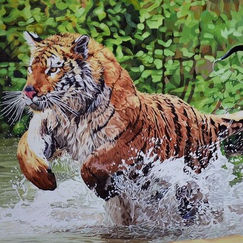 pursuit , 24 x 18 inch, mithran acharya ,24x18inch,canvas,paintings,wildlife paintings,nature paintings,photorealism paintings,realistic paintings,paintings for dining room,paintings for living room,paintings for bedroom,paintings for office,paintings for hotel,paintings for school,paintings for hospital,acrylic color,GAL01221323101,tiger,national animal,pride of the jungle,wildlife