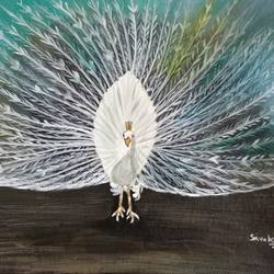 white peacock, 18 x 16 inch, sivakami  ganesh,18x16inch,canvas,paintings,nature paintings,paintings for living room,acrylic color,GAL0823123175