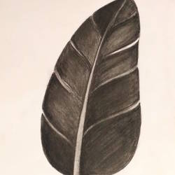 burnt leaf, 11 x 15 inch, megha dutta,11x15inch,drawing paper,drawings,realism drawings,paintings for dining room,paintings for living room,paintings for bedroom,paintings for office,paintings for bathroom,paintings for kids room,paintings for hotel,paintings for kitchen,paintings for school,paintings for hospital,charcoal,GAL01106523187