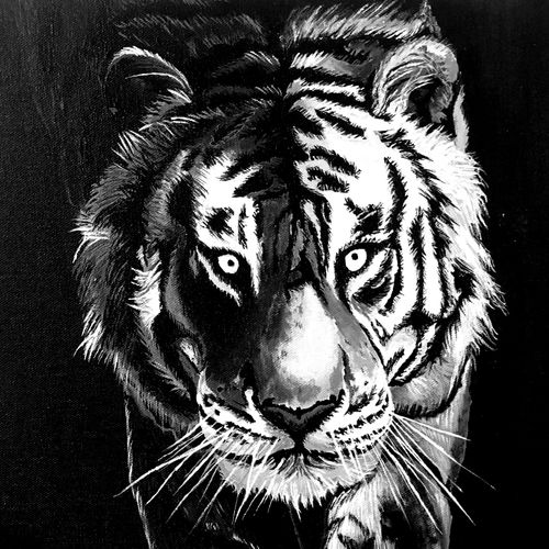white tiger face , 12 x 12 inch, goutam ashish mohapatra,12x12inch,canvas board,wildlife paintings,animal paintings,paintings for dining room,paintings for living room,paintings for bedroom,paintings for office,paintings for hotel,paintings for dining room,paintings for living room,paintings for bedroom,paintings for office,paintings for hotel,acrylic color,GAL01323823232