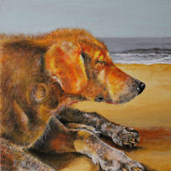 the beach dog, 20 x 16 inch, varun  n rao,20x16inch,canvas,paintings,art deco paintings,photorealism paintings,realism paintings,animal paintings,dog painting,paintings for dining room,paintings for living room,paintings for hotel,acrylic color,GAL0880923441