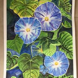 morning glory , 12 x 17 inch, smita yadav,12x17inch,brustro watercolor paper,paintings,nature paintings,watercolor,GAL01310423514