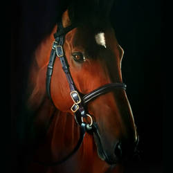 horse oil painting, 22 x 29 inch, ratheesan veniyil,22x29inch,canvas,paintings,paintings for dining room,paintings for living room,paintings for bedroom,paintings for hotel,oil color,GAL0930923548