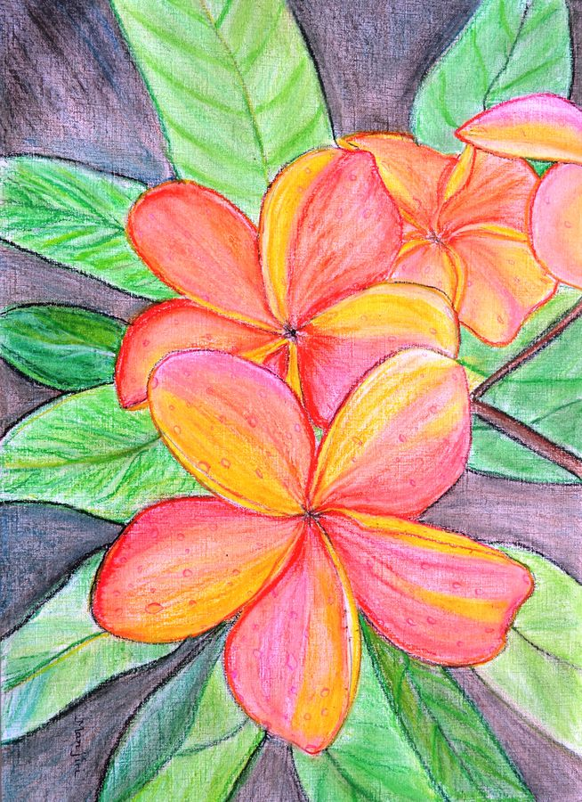 frangipani blossoms, 17 x 23 inch, manjiri kanvinde,flower paintings,paintings for bedroom,thick paper,pastel color,17x23inch,GAL01202356