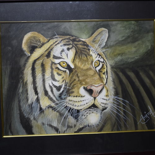 tiger, 16 x 11 inch, arvind shaakya,16x11inch,canson paper,paintings,wildlife paintings,paintings for living room,paintings for living room,watercolor,GAL01065823669