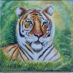 bengal tiger, 12 x 12 inch, mangal singh,12x12inch,canvas,figurative paintings,still life paintings,photorealism paintings,animal paintings,realistic paintings,paintings for dining room,paintings for living room,paintings for hotel,paintings for school,paintings for dining room,paintings for living room,paintings for hotel,paintings for school,acrylic color,oil color,GAL0648523677