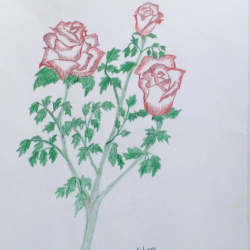 red rose, 9 x 11 inch, mrs. kalyani lahon,fine art drawings,paintings for dining room,love paintings,paper,pencil color,9x11inch,GAL06572457