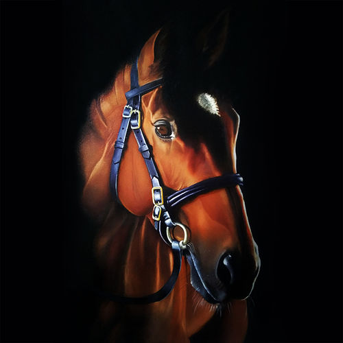 horse love, 23 x 30 inch, ratheesan veniyil,23x30inch,canvas,paintings,paintings for dining room,paintings for living room,paintings for bedroom,paintings for hotel,paintings for dining room,paintings for living room,paintings for bedroom,paintings for hotel,oil color,GAL0930924690