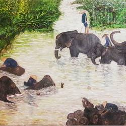 """bathing elephants"", 20 x 16 inch, shivi razdan,20x16inch,canvas,paintings,wildlife paintings,oil color,GAL01422724908"