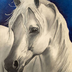 speaking horse, 12 x 18 inch, preetika jain,12x18inch,canvas,paintings,wildlife paintings,nature paintings,realistic paintings,horse paintings,paintings for dining room,paintings for living room,paintings for bedroom,paintings for office,paintings for hotel,paintings for hospital,oil color,GAL01440425147