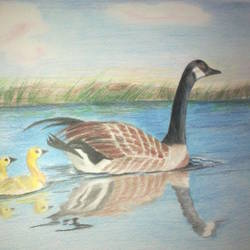 mother duck and chicks, 17 x 12 inch, prabha  panth,17x12inch,drawing paper,paintings,animal paintings,paintings for living room,paintings for kids room,pencil color,GAL0390725231