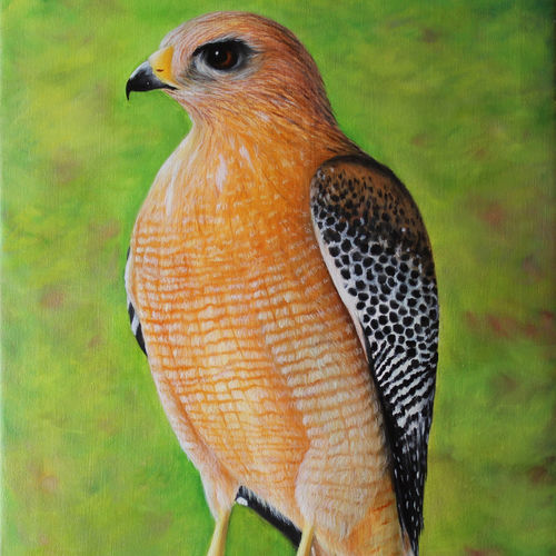 hawk - a bird, 18 x 24 inch, goutami mishra,18x24inch,canvas,paintings,wildlife paintings,nature paintings,photorealism paintings,realism paintings,animal paintings,realistic paintings,paintings for dining room,paintings for living room,paintings for bedroom,paintings for office,paintings for kids room,paintings for hotel,paintings for school,oil color,GAL046525367