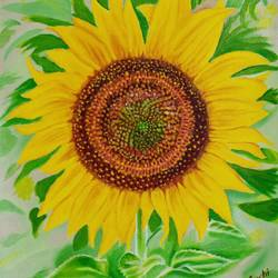 sunflower, 14 x 15 inch, suchitra tata,14x15inch,canvas,paintings,flower paintings,nature paintings,paintings for dining room,paintings for living room,paintings for bedroom,paintings for office,paintings for kids room,paintings for school,paintings for hospital,oil color,GAL0288625458