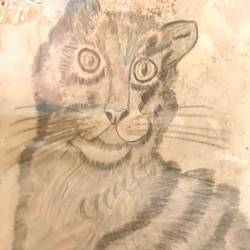 noble cat, 11 x 14 inch, rita dash,11x14inch,rice paper,paintings,animal paintings,paintings for living room,paintings for hotel,paintings for school,pencil color,GAL01382125517