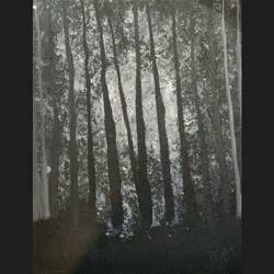 moonlight shining through the trees, 10 x 14 inch, aarushi singhal,10x14inch,canvas,paintings,nature paintings,acrylic color,GAL01486025556