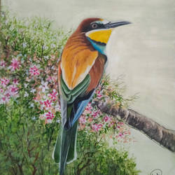 bee eater bird painting, 12 x 17 inch, aarti jadli,12x17inch,canson paper,paintings,wildlife paintings,paintings for living room,paintings for hotel,paintings for school,watercolor,paper,GAL01247425575