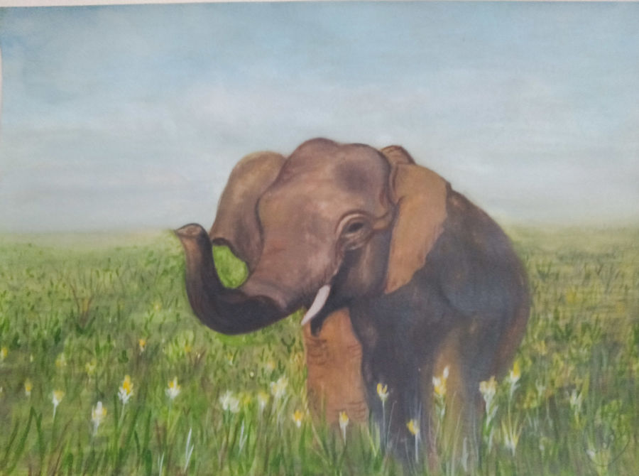 asian elephant painting, 12 x 17 inch, aarti jadli,12x17inch,canson paper,paintings,wildlife paintings,elephant paintings,paintings for living room,watercolor,paper,GAL01247425666
