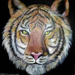 tiger face, 12 x 16 inch, tapas paul,12x16inch,canvas board,paintings,wildlife paintings,acrylic color,GAL01146626029