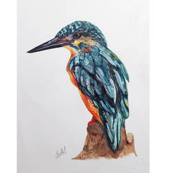 wild life portrait  - bird painting - kingfisher, 11 x 15 inch, senthil kumar a,11x15inch,thick paper,paintings,wildlife paintings,still life paintings,portrait paintings,nature paintings,photorealism paintings,portraiture,animal paintings,realistic paintings,dog painting,paintings for dining room,paintings for living room,paintings for bedroom,paintings for office,paintings for bathroom,paintings for kids room,paintings for hotel,paintings for kitchen,paintings for school,paintings for hospital,acrylic color,watercolor,GAL01543426199