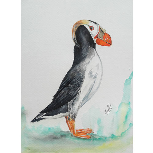 wild life portrait  - bird painting - tufted puffin, 8 x 12 inch, senthil kumar a,8x12inch,thick paper,paintings,wildlife paintings,still life paintings,portrait paintings,nature paintings   scenery paintings,animal paintings,realistic paintings,horse paintings,dog painting,paintings for dining room,paintings for living room,paintings for bedroom,paintings for office,paintings for bathroom,paintings for kids room,paintings for hotel,paintings for kitchen,paintings for school,paintings for hospital,acrylic color,watercolor,GAL01543426360