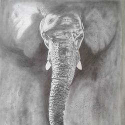 elephant, 22 x 30 inch, shiuli majumder,22x30inch,cartridge paper,drawings,modern drawings,graphite pencil,GAL01355226468