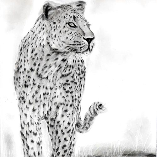 leopard , 12 x 17 inch, kishore r s,12x17inch,handmade paper,drawings,figurative drawings,paintings for dining room,paintings for living room,paintings for bedroom,paintings for office,paintings for kids room,paintings for hotel,paintings for school,charcoal,GAL0958126662
