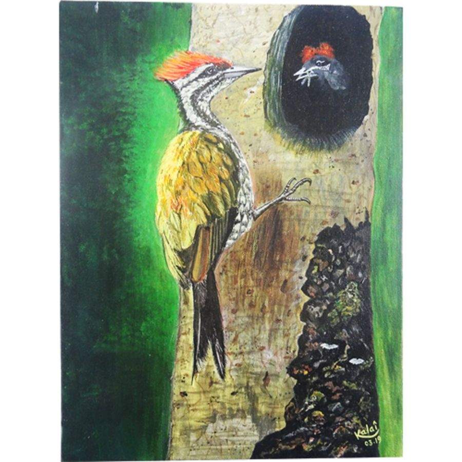 woodpecker feeding chick, 16 x 12 inch, vgo cart,16x12inch,canvas,paintings,wildlife paintings,nature paintings | scenery paintings,acrylic color,GAL01132727027