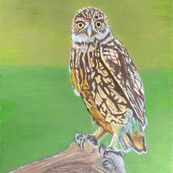 owl on a tree, 9 x 16 inch, pritpal singh sodhi,9x16inch,canvas board,paintings,wildlife paintings,landscape paintings,still life paintings,nature paintings | scenery paintings,illustration paintings,photorealism,portraiture,animal paintings,paintings for dining room,paintings for living room,paintings for bedroom,paintings for office,paintings for bathroom,paintings for kids room,paintings for hotel,paintings for kitchen,paintings for school,paintings for hospital,oil color,GAL01593027443