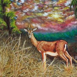 may, 40 x 30 inch, samit kamar,40x30inch,canvas,paintings,wildlife paintings,paintings for living room,oil color,GAL0443427617