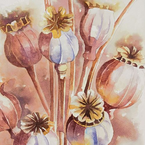 poppy pods , 7 x 11 inch, anjana  sihag,7x11inch,brustro watercolor paper,flower paintings,nature paintings | scenery paintings,paintings for living room,paintings for bedroom,paintings for office,paintings for living room,paintings for bedroom,paintings for office,watercolor,paper,GAL01579427638