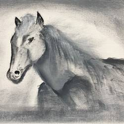 horse portrait, 16 x 12 inch, amit soni,16x12inch,canvas board,paintings,portraiture,surrealism paintings,animal paintings,horse paintings,oil color,GAL01671927787
