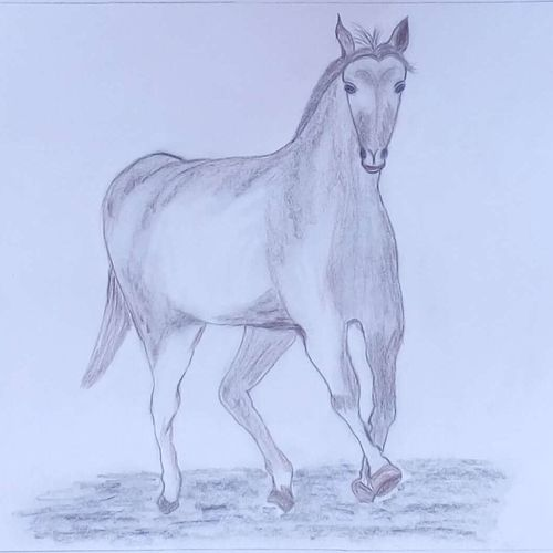 running horse-1, 9 x 11 inch, mrs. kalyani lahon,paintings for living room,wildlife paintings,horse paintings,paper,pencil color,9x11inch,GAL06572796
