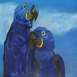 hyacinth macaws , 13 x 21 inch, netanel  leo ,13x21inch,canvas,paintings,wildlife paintings,photorealism paintings,animal paintings,acrylic color,GAL01693428046