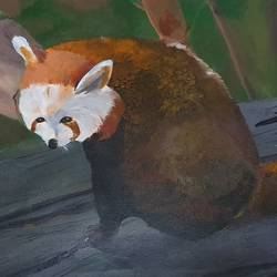 red panda, 21 x 13 inch, netanel  leo ,21x13inch,canvas,paintings,wildlife paintings,photorealism paintings,animal paintings,acrylic color,GAL01693428049
