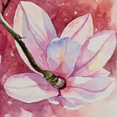 magnolia , 5 x 8 inch, anjana  sihag,5x8inch,brustro watercolor paper,flower paintings,paintings for dining room,paintings for living room,paintings for bedroom,paintings for office,paintings for hotel,paintings for dining room,paintings for living room,paintings for bedroom,paintings for office,paintings for hotel,watercolor,GAL01579428113