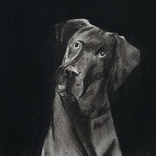 dog charcoal sketch , 10 x 14 inch, netanel leo ,10x14inch,thick paper,drawings,paintings for dining room,paintings for living room,paintings for bedroom,paintings for office,paintings for kids room,paintings for hotel,figurative drawings,photorealism drawings,portrait drawings,paintings for dining room,paintings for living room,paintings for bedroom,paintings for office,paintings for kids room,paintings for hotel,charcoal,GAL01693428146